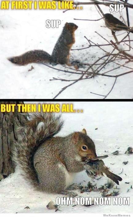 squirrels on bath salts. drugs are bad mkay. Squirrel Bird