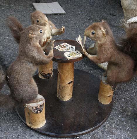 Squirrels Playing Poker. .. taxidermy fail Squirrel Cards