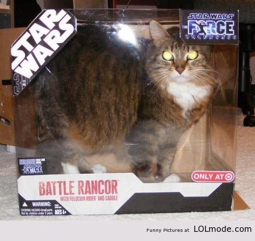 "Star Wars Cat. . Funny PI-: tureen at "" '. I laughed harder than I should have at this. Cat star wars"