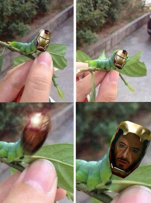 Stark bug. . Stark bug
