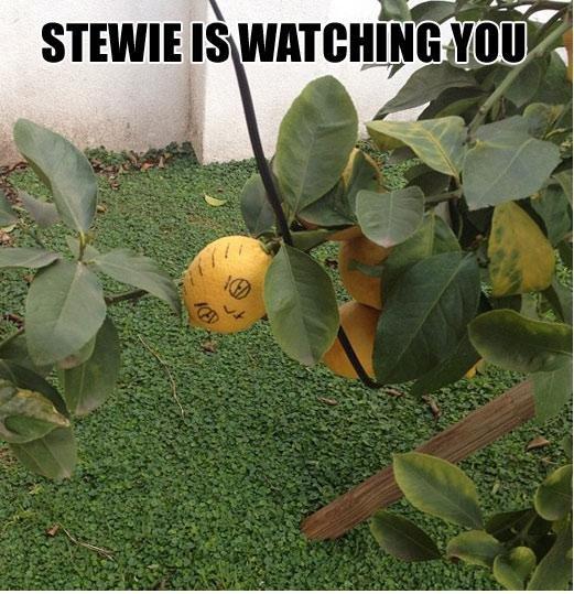 Stewie. . Cear, Stewie Cear