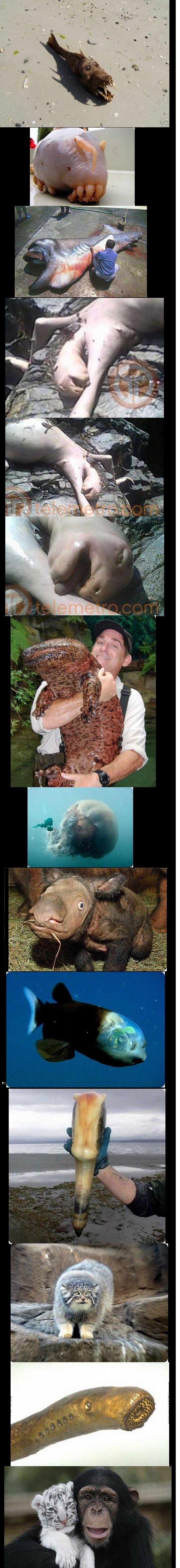 Strange Animals.. I dont know if it is morbid enough. Hope you'll enjoy.. you missed one Strange animals