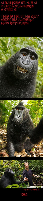strange selfies. found on stumbleupon. photogropher's name is david slater. monkey steal Camera Pictures selfie