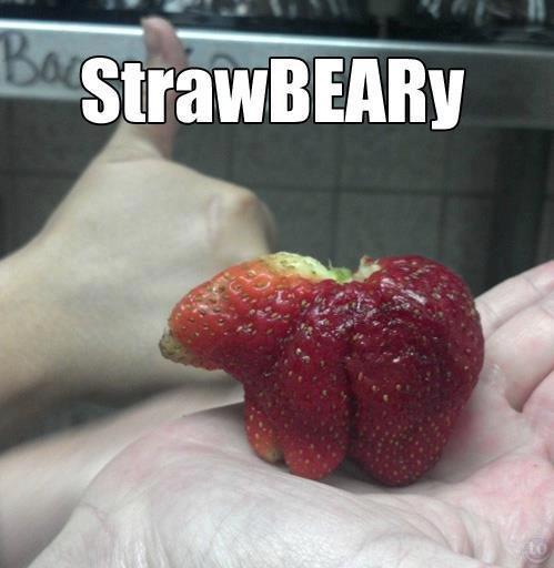 strawBEARy. Saw the strawberry dragon yesterday, thought id post this.. strawBEARy Saw the strawberry dragon yesterday thought id post this
