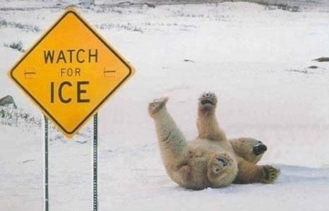 Stupid bear. Oh bear... wee