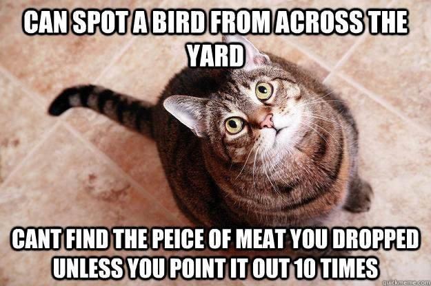 stupid cats. . cm :jiji! lerl! ! ll! l! tll MEAT mu jii': istari: Crtc.. DO YOU SEE THE MEAT??? stupid cats cm :jiji! lerl! ! ll! l! tll MEAT mu jii': istari: Crtc DO YOU SEE THE MEAT???