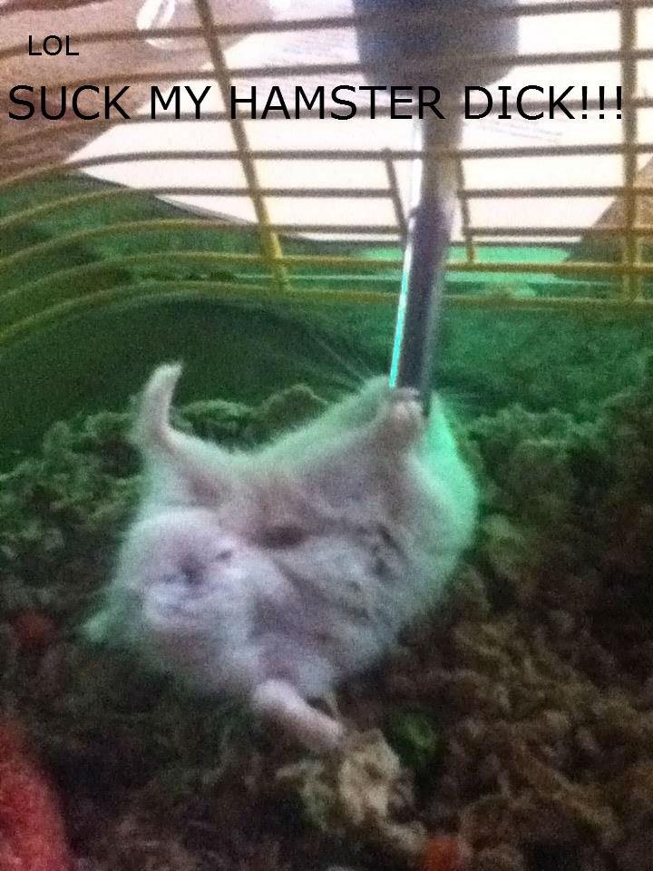 Suck It. My friend's hamster. hamsters will rule the world