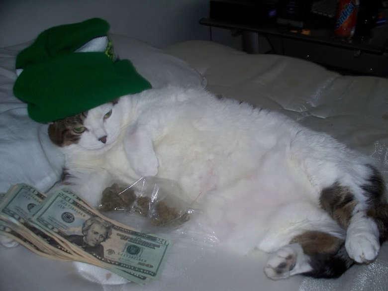 Supreme Dealer. dealer cat. gangsta dealer c