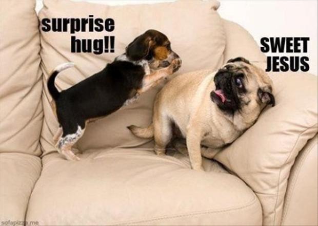 Surpirse.....Surprise....... . Surpirse Surprise