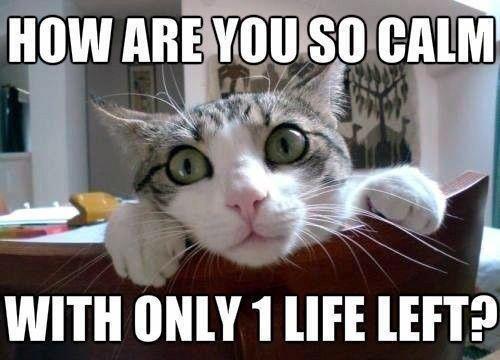 Surprised Kitten. Source: www.facebook.com/GloriousMind. new Ea 'gt l sea 5 cxllml ME EFT? Kitten funny kitten Funny Cats Cats funny surprised kitten