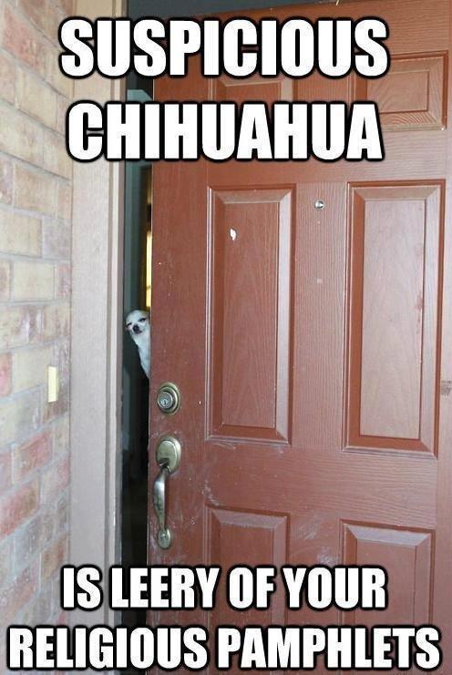 Suspicious Chihuahua. is leery of your religious pamphlets. r' lilfmb L Luminous. inb4 ola ke kiere suspicious dog j