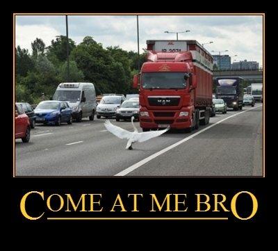 Swan bro. . COME. AT 1/ BRO Swan bro COME AT 1/ BRO