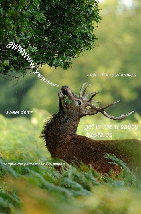 Sweet Damn. Fine as leaves. sweet dam. Deer