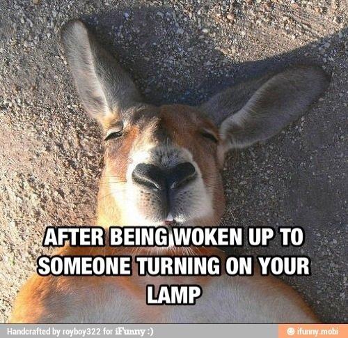 Waking up in light sucks. .