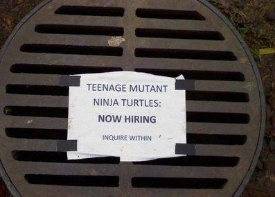 WANTED: Teenage Mutant Ninja Turtle. lolololololololol :3. MUTANT NINJA TURTLE: NEW HIRING teenage Mutant Ninja turtles wanted
