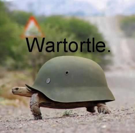 Wartortle. . Wartortle