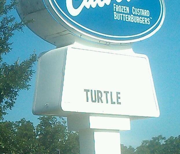wat?. it has spoken.. Turtle