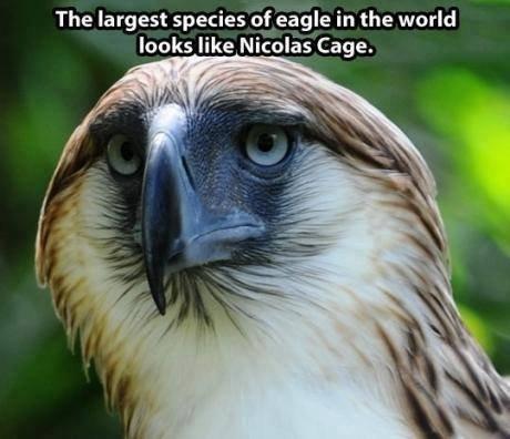 Wat. Seen FB. The largest species of eagle in the world leeks like Nicolas Cage. BLAH