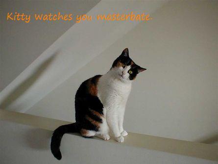 Weird kitty Kat. . Animals Crazy Warning