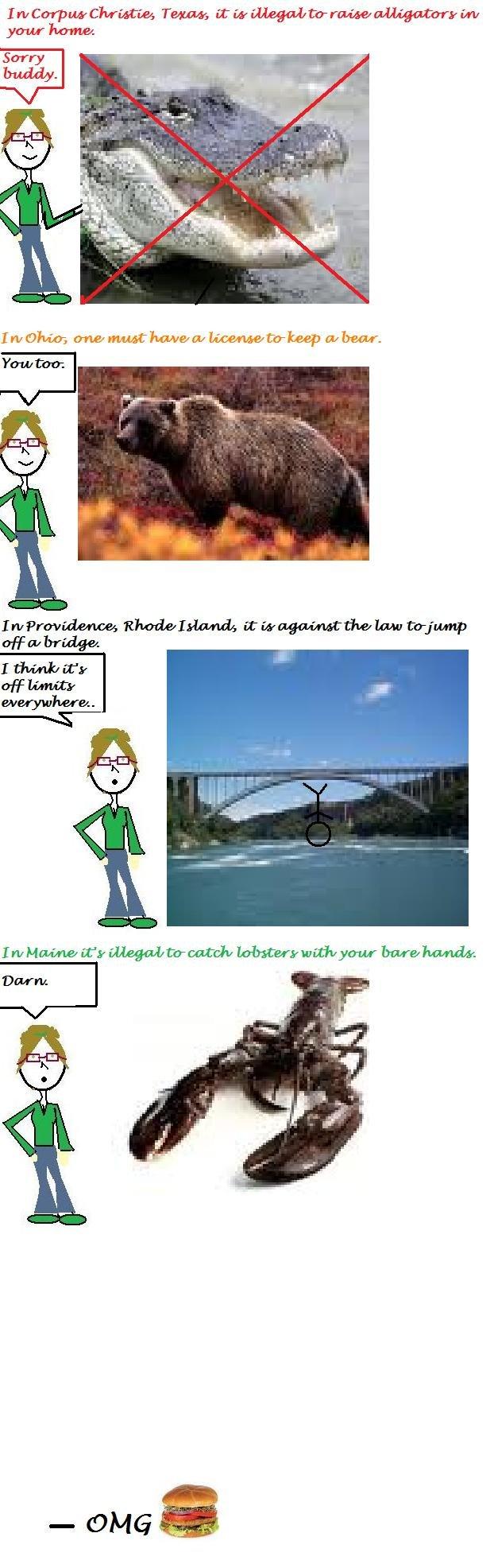 Weird Laws. Enjoy. .. Bear, alligator, lobster, bridge. Which does not belong? haha weird strange la