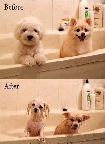 Wet Pups.. Indeed. Wet Pups Indeed