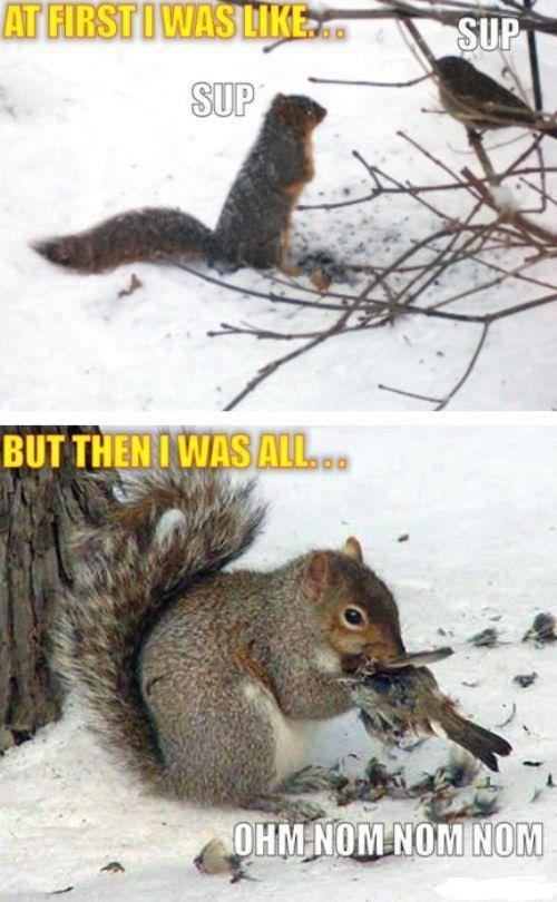 When squirrels attack.... nom nom nom. squirrels and shit
