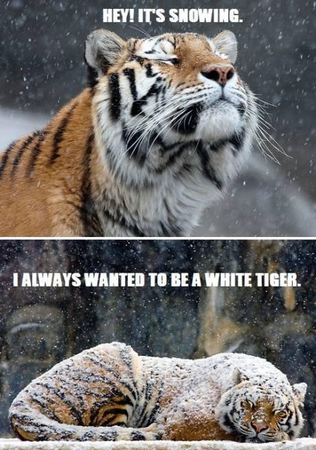 White is always better. . um' IFS sauna. I. Still just cats. Big beautiful cats. White is always better um' IFS sauna I Still just cats Big beautiful