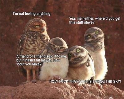 Woah.... I like owls.. rm not feeling an-. rating Yea, me manner. whenhe' d you get Ills stuff siege? ruu Mike? '. I'm not feeling anyhting Owls