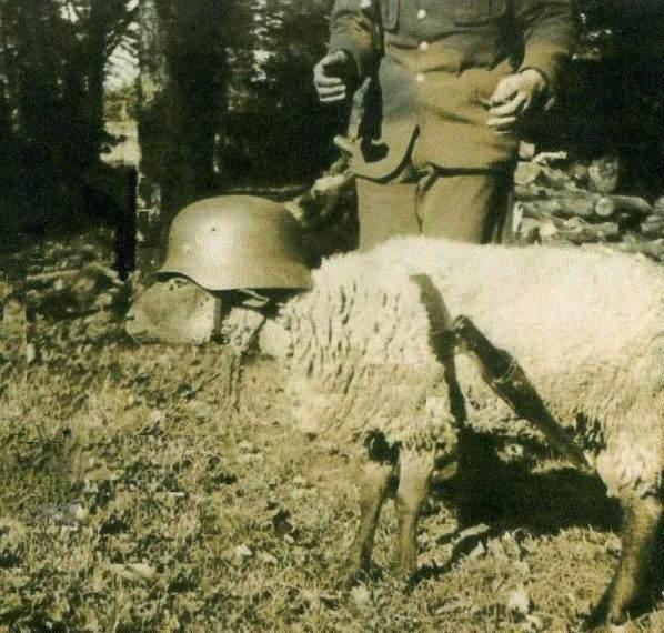 wondering. Still wondering why Germany lost WW2?.. Blitz sheep blub im a bike