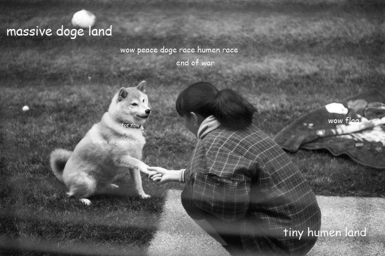 wow. . wow peace tinge mag. human race d O g e do GE Dog oge doge