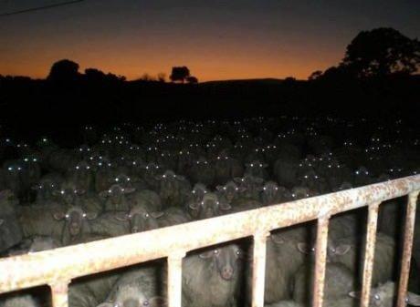 Wrong neighborhood. sheep fker. baaa