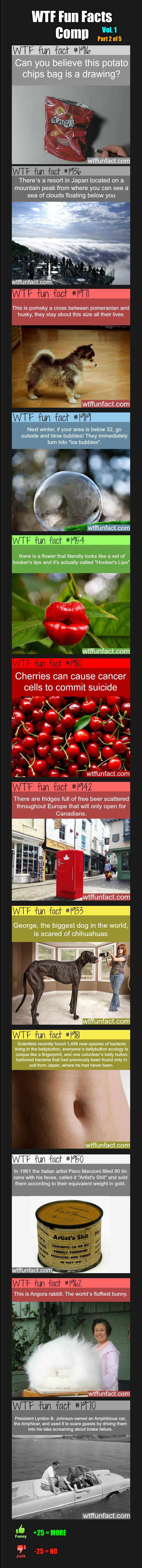 WTF Fun Facts Comp Vol. 1 Part 2. Vol. 1: -WTF Fun Facts Comp Vol.1 Part 1: /WTF+Fun+Facts+Comp+Vol.+1+Part+1/fun... Other: -Promo: /Fun+Facts+Comp/funny-pictur wtf fun facts