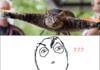 Half cat...