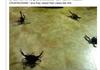 Crabifer